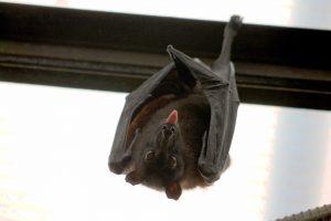 Sassy romance bat