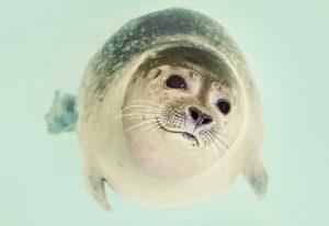 seal writes romance