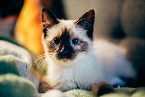 cat binge read her favorite patreon artists